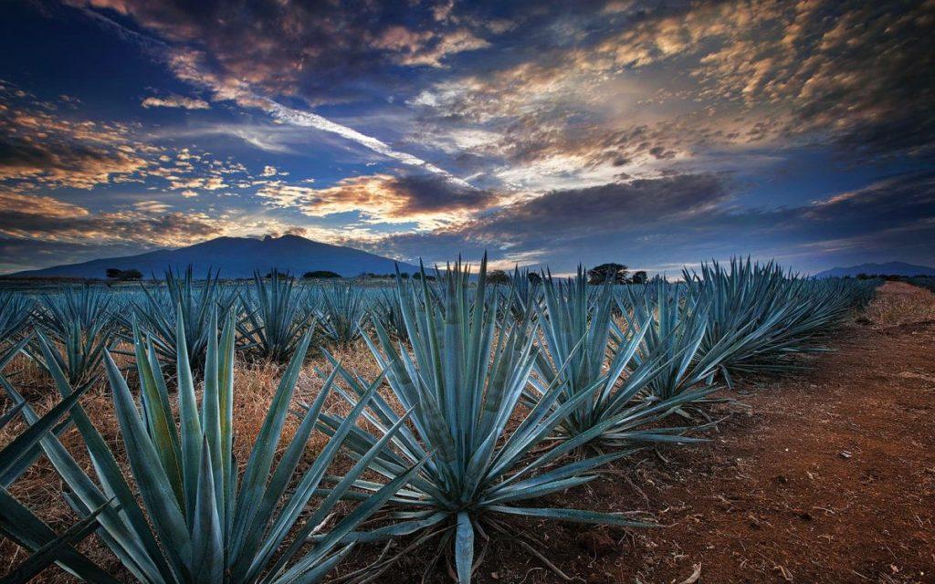 Paisaje Agavero cerca de Tequila